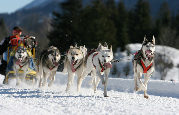 Dog-sled---Exit-Glacier-dog-sledding-in-alaska