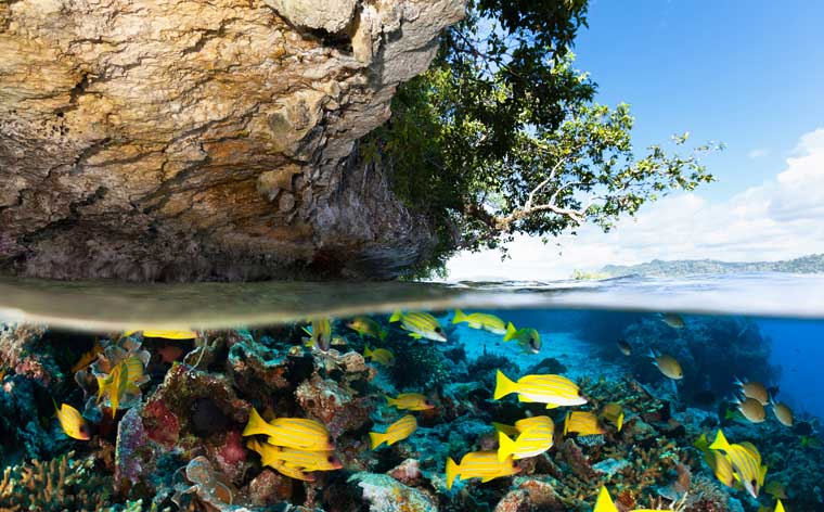 Visit amazing places from BBC's Planet Earth