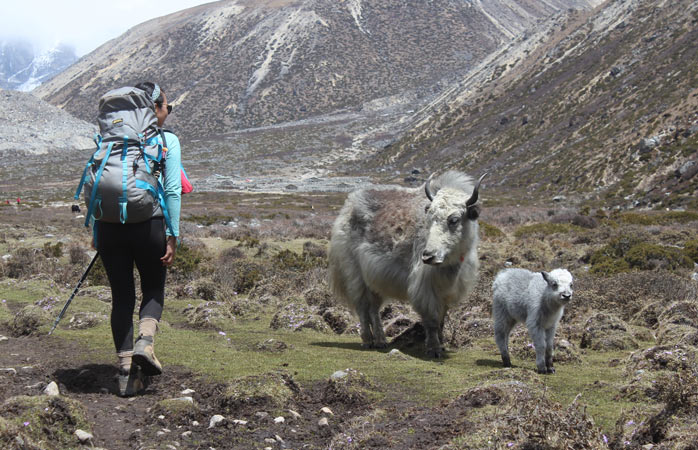 Making new friends between Tengboche and Dingboche