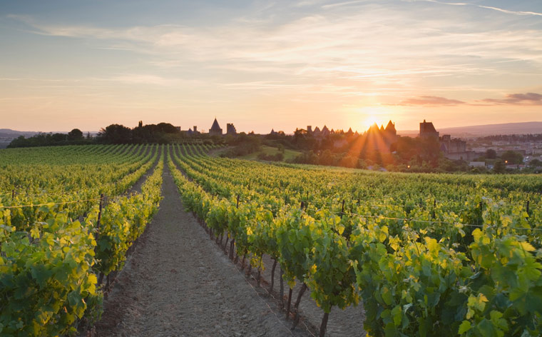 Languedoc wine tours: a trip through the vineyards of Southern France