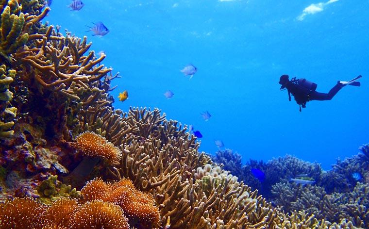 Underwater wonderlands: the best scuba diving sites in Asia