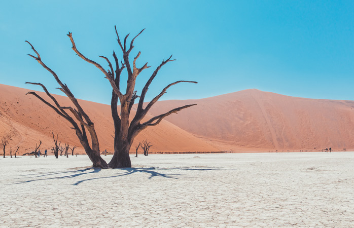 The deceased trees at Deadvlei have stood the test of time-consigned to a skeletal existence in this parched underworld