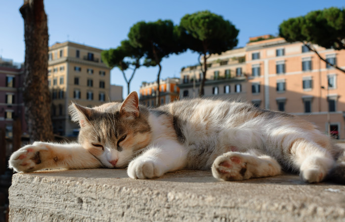 Exploring Roman ruins is even more enjoyable with cats